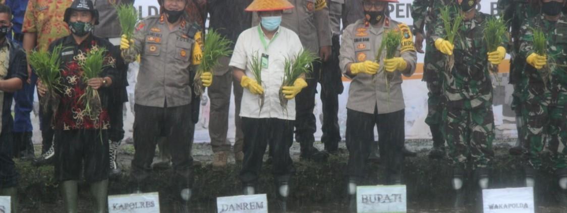 Kapolres Bangka tengah dan Forkompinda dampingi Waka Polda dalam Penanaman bibit padi dan pelepasan benih ikan